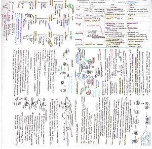 Biology Cheat Sheet 2